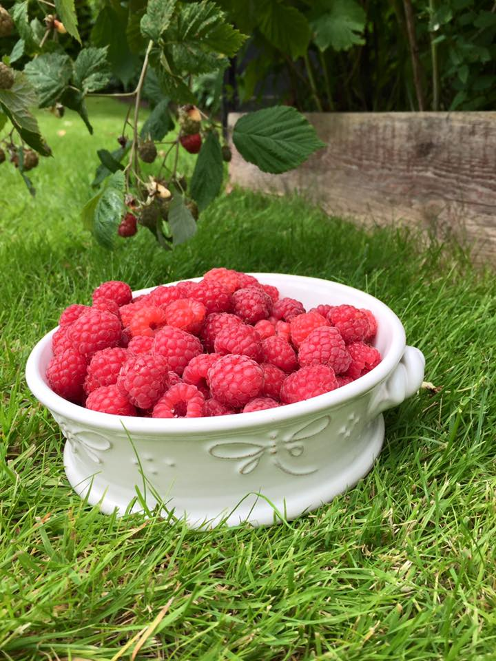 raspberries in a dragonfly bowl by Elaine Wells - Potter